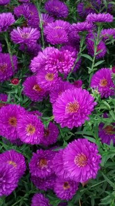 Beautiful Flowers, Roses, World, Pink, Rose