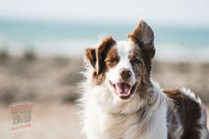 Border Terrier, Border Collie, Collie Dog, Unique Female Dog Names, Dog Sling, Rainbow Dog, Dog Years, Dog Teeth, Puppy Names