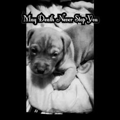 My puppy died from sickness...