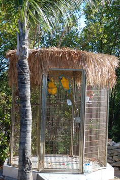 Huge Outdoor Bird Cages aviary
