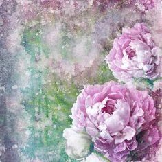 Rose couleur lilas