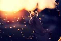 Make a wish and b l o w . . .