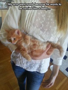 Getting Carried All Day #funny #cat #kitty #kitten #cute #sweet