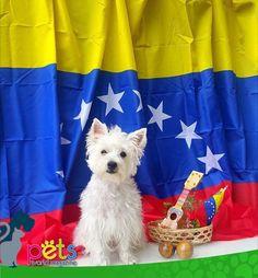 Feliz Día de la Independencia a nuestros hermanos Venezolanos   #PetsWorldMagazine #RevistaDeMascotas #Panama #Mascotas #MascotasPanama #MascotasPty #PetsMagazine #MascotasAdorables #Perros #PerrosPty #PerrosPanama #Pets #PetsLovers #Dogs #DogLovers #DogOfTheDay #PicOfTheDay #Cute #SuperTiernos
