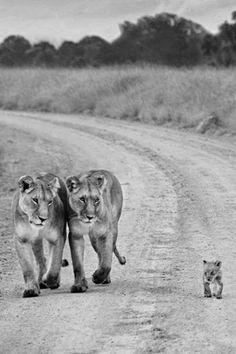 Credo che la nostra vita si riduca a una lunga passeggiata,  dove chi ti vuole veramente bene ti cammina accanto  preoccupato di non avere un passo diverso dal tuo.