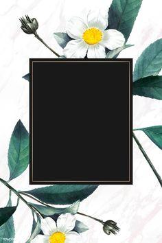Rose Frame, Flower Frame, Widescreen Wallpaper, Iphone Wallpapers, Musk Rose, Image Fun, Summer Landscape, Nature Images, Black Backgrounds