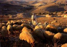 The Farmer and the Shepherd | Pre-Pesach Class 2013