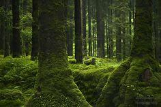 """childoftheancientforest: """"  Magic Forest … Gougane Barra Forest Park, West Cork -Ireland by Gosia Mertuszka """""""
