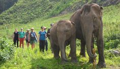 Volunteers at Journey to Freedom walk with elephants to observe their behaviour