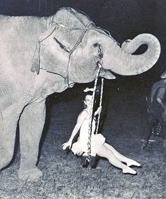 Circus performer swinging from an elephant