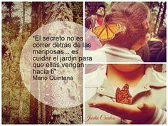 El secreto no es correr detrás de las mariposas... Es cuidar el jardín para que ellas vengan a ti.  Frases.  Citas.  Jardín Creativo.