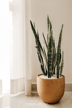 Wondering which indoor plants to get home this holiday season? Here are the top 10 air purifying indoor plants that are super easy to care for and perfect for beginners! Check it out now. Best Air Purifying Plants, Plantas Indoor, Cactus Plante, Best Indoor Plants, Aloe Vera Plant Indoor, Outdoor Plants, Perfect Plants, Bathroom Plants, Diy Décoration