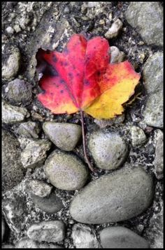 A Colorful Leaf on My Stone Patio Floor