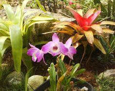 Orquideas e Bromélias
