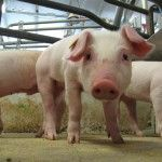 """What Consumers Seem to Forget: My Reaction to W5′s """"Factory Farming"""" Episode"""
