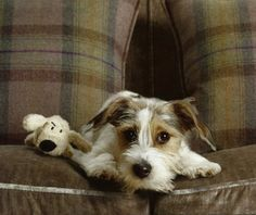 Jack Russell and Doggy Friend