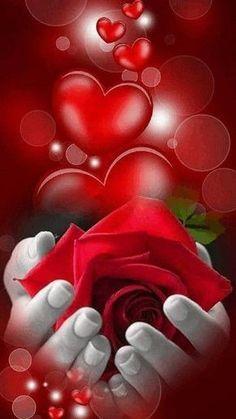Imagenes Bonitas Amigosdeaquiydeallacompartiendo Gabitos is part of Love gif - Love Heart Images, Love You Images, Rose Images, Free To Use Images, Rose Flower Wallpaper, Heart Wallpaper, Beautiful Love Pictures, Beautiful Gif, Beautiful Rose Flowers