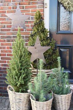 Kerstbomen bij de voordeur landelijk