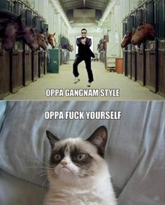 grumpy cat gangnam style - Google Search