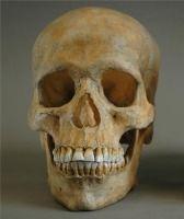 Se consideran Homo sapiens de forma indiscutible a los que poseen tanto las características anatómica de las poblaciones humanas actuales como lo que se define como «comportamiento moderno». Los restos más antiguos de Homo sapiens son los de Omo I, llamados hombres de Kibish, (Etiopía) con 195 000 años. La evidencia más antigua de comportamiento moderno son las de Pinnacle Point (Sudáfrica) con 165 000 años.