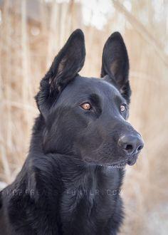 German Shepherd Begs Owner To Let His Best Friend Inside In 2020