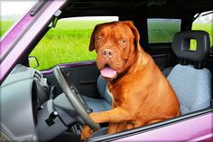 Cars are made of numerous potentially dangerous parts for your pets. If you are someone who likes to travel around with your pets ….