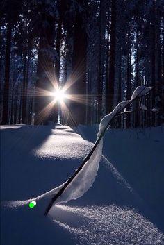 70 Ideas Winter Landscape Photography Christmas Snow Scenes For 2020 Winter Szenen, Winter Magic, Winter Light, Winter Sunset, Landscape Photography, Nature Photography, Photography Ideas, Foto Picture, Snow Scenes