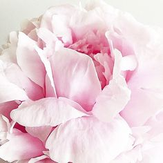 """668 tykkäystä, 56 kommenttia - • J O D I • Flowers & Flatlays (@jodianne_) Instagramissa: """"• pink love •"""""""