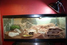 Leopard Gecko Native Habitat Phase 1