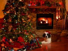 Do you and your pet have any Christmas traditions in your family?