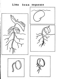 Free Coloring Of Bean Plant Life New Life Cycle Of Flower Worksheet Preschool Worksheets Science Worksheets, Science Lessons, Teaching Science, Science Projects, Art Lessons, Plant Science, Science And Nature, Preschool Activities, Spring Activities