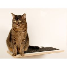 Square Cat Habitat Buddha Wall Perch | AllModern