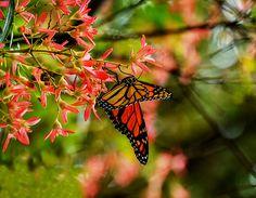 Butterfly.  Auckland, New Zealand.  Visit my portfolio at www.zarirmadon.com