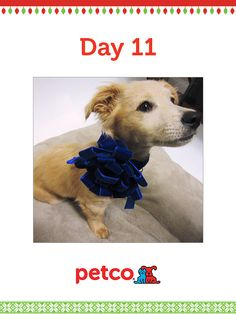 Here is today's 12 Days of Pinterest featured image (12/13/2012). Pin this Doggy Bow Collar image to one of your boards for a chance to win a 500 dollar Petco shopping spree, plus 500 dollar Petco Gift Card for a Petco Foundation Shelter/Rescue of your choice. Winner will be announced tomorrow (12/14/2012) between 12 pm and 5 pm Pacific time.