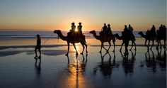 Sunset Camel Ride in Broome | Australia