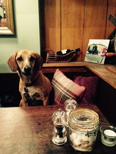 Our review of  Konnigans Restaurant, SW18 - a Dog Friendly Cafe & Restaurant in London.