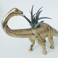 Large Gold Brontosaurus Dinosaur Planter with Air Plant