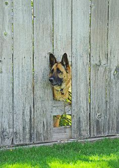 #GSD looking out