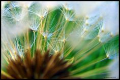 flower blossom definition