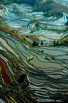 awesome green gradient on Rice paddies - yuang yuang, yunnan china
