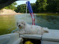 Jake in the Cove @ Alum Creek Lake State Park #dogdaysofsummer #WestMarine
