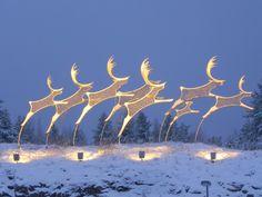 Reindeers of the airport of Rovaniemi