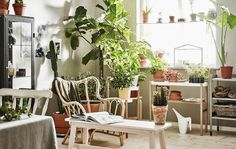 A bright room is furnished with a planting station, a shelf, a plant stand and chairs, and is filled with lots of plants.