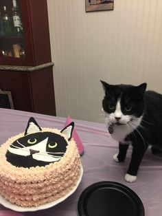 My cat turned 10 today so my wife baked her a cake   cats funny pictures