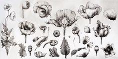 Fwd: Papaver somniferum - Zharova Arsenia Vintage Botanical Prints, Botanical Drawings, Botanical Art, Botanical Illustration, Poppy Drawing, Small Tattoos, Poppies, Street Art, Flowers