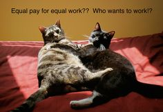 cats against equal pay  - Confused Cats Against Feminism is a project of We Hunted the Mammoth:The New Misogyny, tracked and mocked.