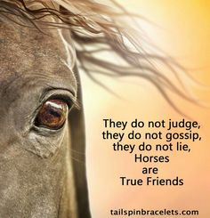 Well said. God, My mule, horses and dogs are my best friends