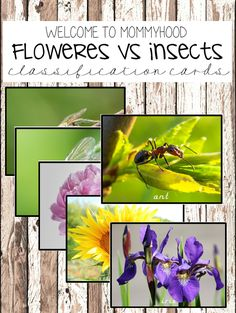 Free Montessori classification cards: insects vs flowers