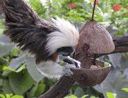 coconut enrichment