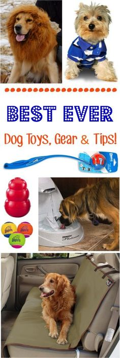 Best Ever Dog Toys, Fun Gear, and Training Tips! ~ at TheFrugalGirls.com #dogs #thefrugalgirls